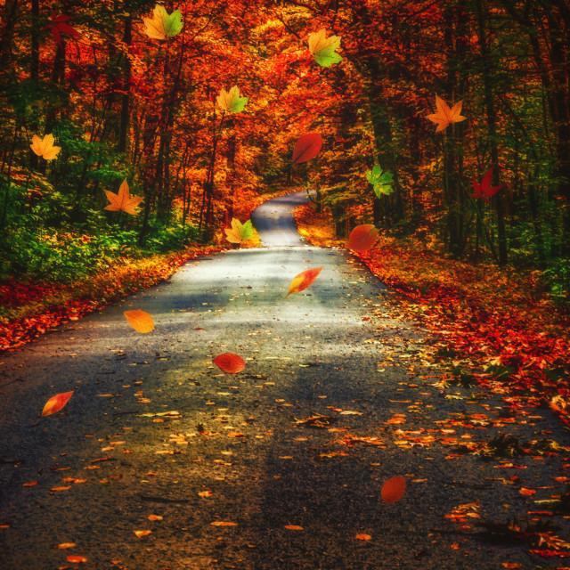 """Autumn's Highway"" stock image"