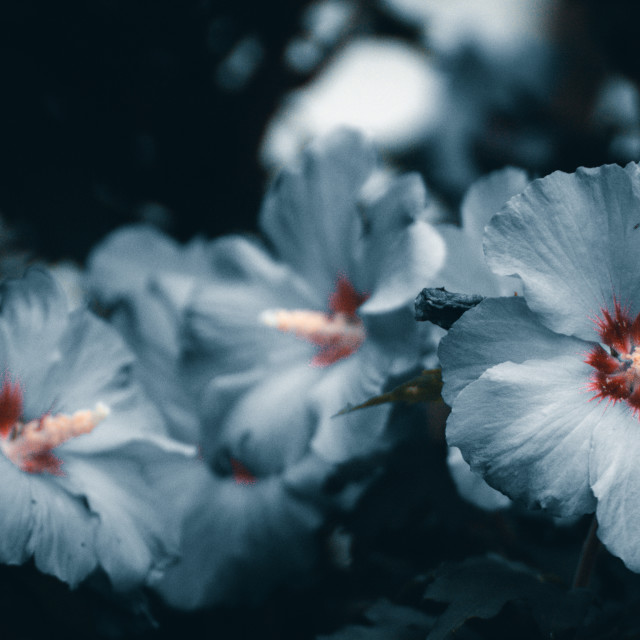 """Nice Summerflower"" stock image"