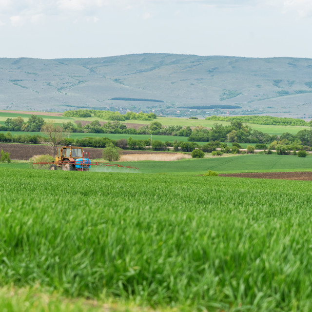 """""""Tractor spraying wheat field."""" stock image"""