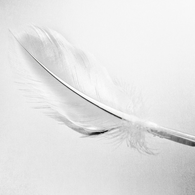 """""""Light Touch (Feather)"""" stock image"""