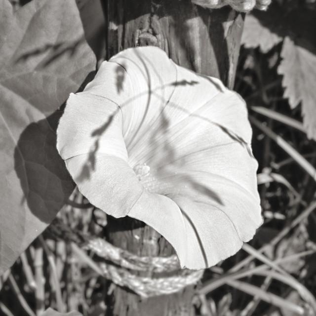"""""""Paper Like Flower"""" stock image"""
