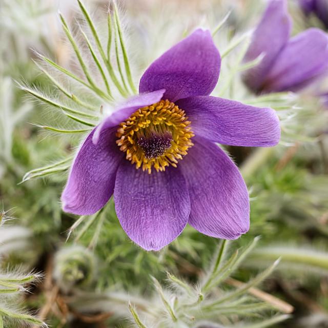 """Flower Of Frost II"" stock image"