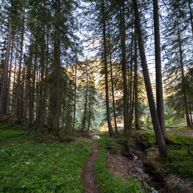 """""""A path that runs through a forest in the Val Pusteria"""" stock image"""