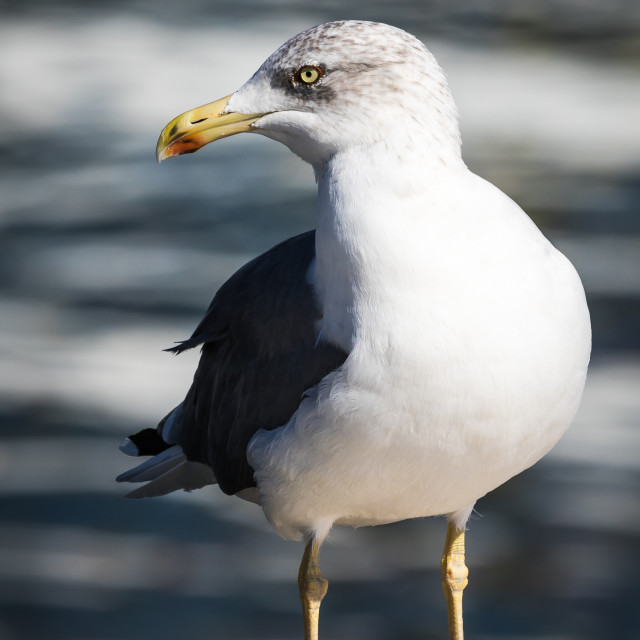 """Seagull standing on a pier"" stock image"