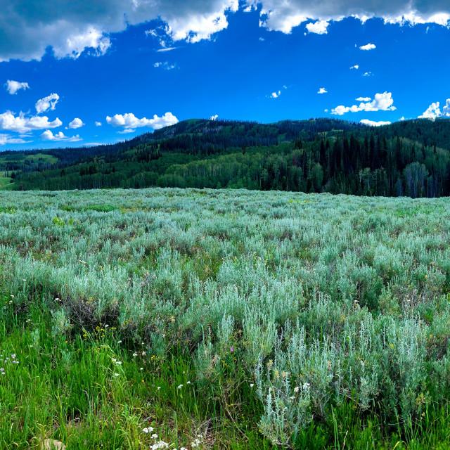 """Pano green grass field"" stock image"