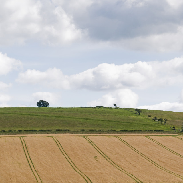 """""""Arable landscape with copy space"""" stock image"""