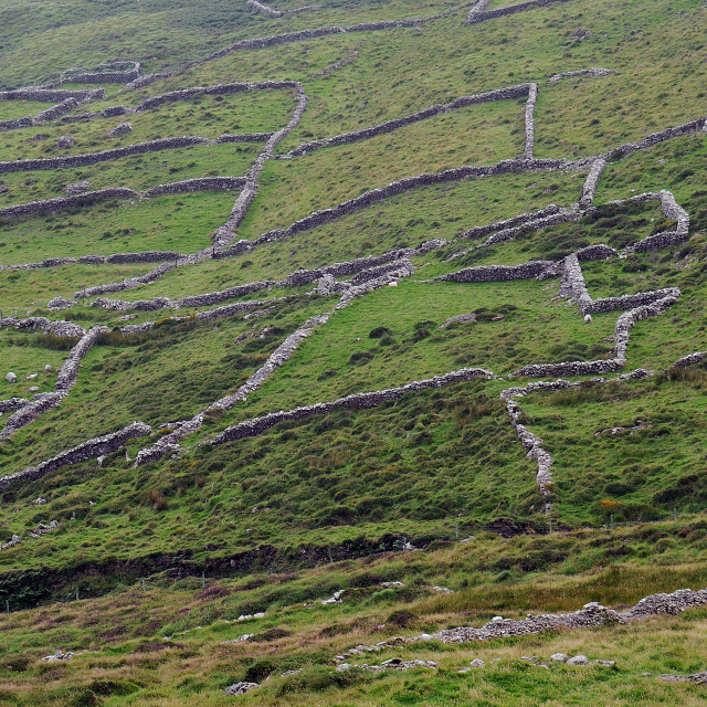 """Prehistoric walls, Ballinskelligs, Co. Kerry"" stock image"