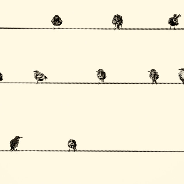 """""""Birds on the Wire."""" stock image"""