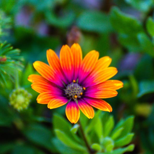 """Flowerpower"" stock image"