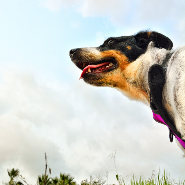 """""""Low angle view of a dogs head"""" stock image"""