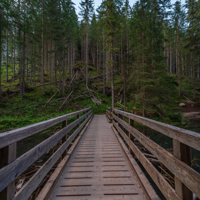 """""""A wooden bridge leads into the green forest in South Tyrol"""" stock image"""