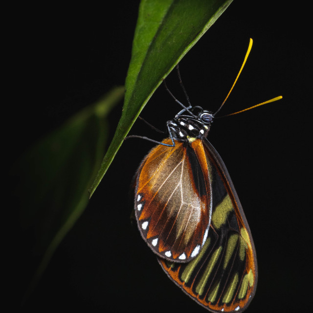 """""""Butterfly at night"""" stock image"""
