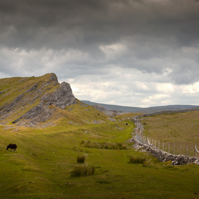 """Black sheep on Cribarth mountain"" stock image"