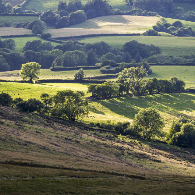 """Fields and farmland of South Wales"" stock image"