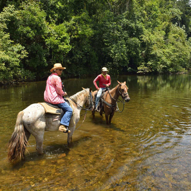 """""""Horses cool off in the river"""" stock image"""