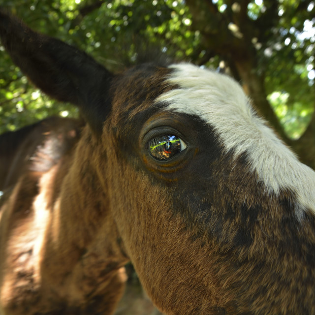 """""""Horses face and eye"""" stock image"""