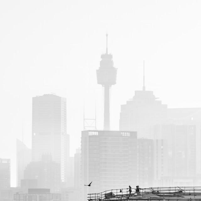 """Sydney Tower, Sydney, Australia"" stock image"