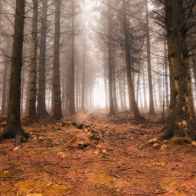"""""""Autumn in the forest"""" stock image"""
