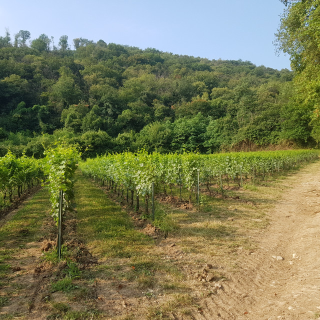 """""""Viticulture near Iseo, Lombardy, Italy"""" stock image"""