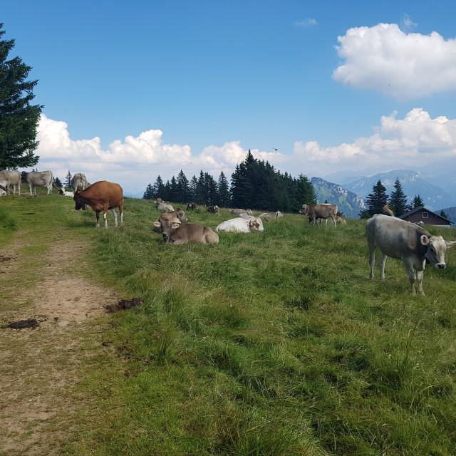 """Upland Swiss Pasture"" stock image"
