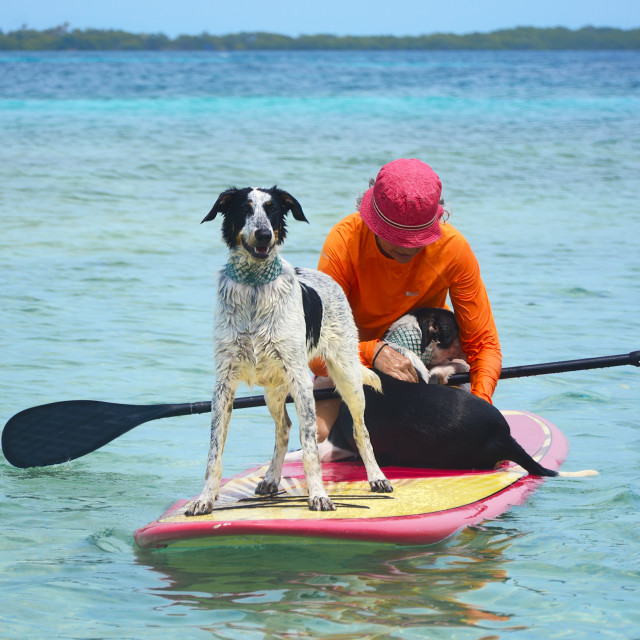 """""""Dogs on paddleboard"""" stock image"""
