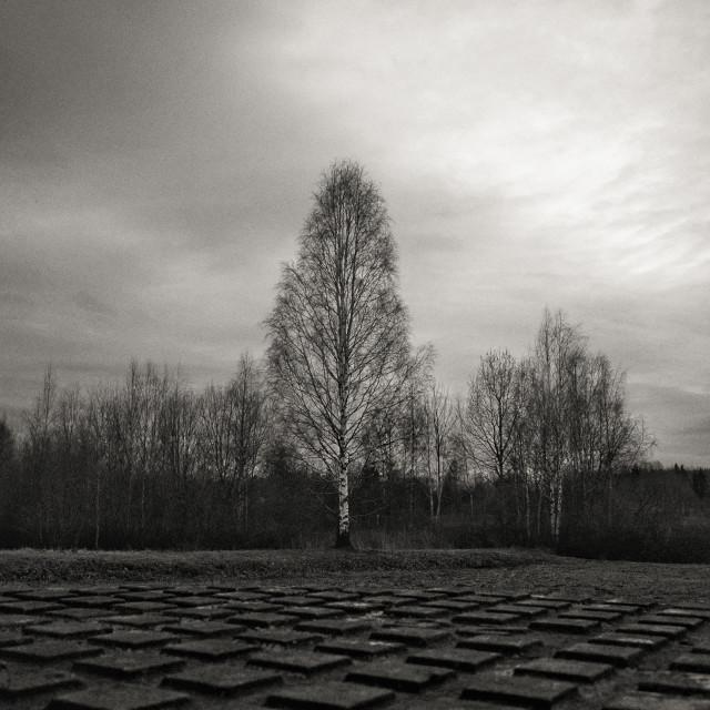 """""""Urban Tree II"""" stock image"""