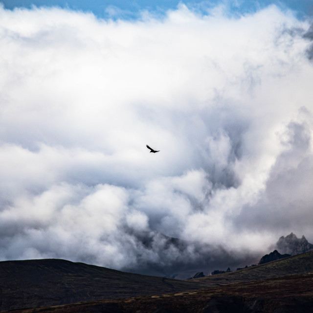 """Raven Flying Through a Dramatic Sky in Iceland"" stock image"