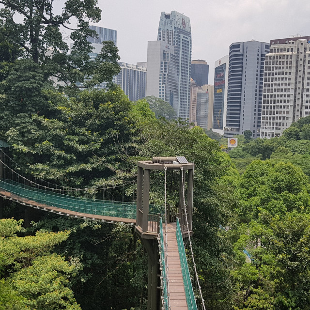 """""""KL Forest Eco Park, Malaysia"""" stock image"""