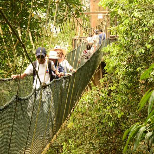 """""""Rope Bridge in Borneo Rainforest"""" stock image"""