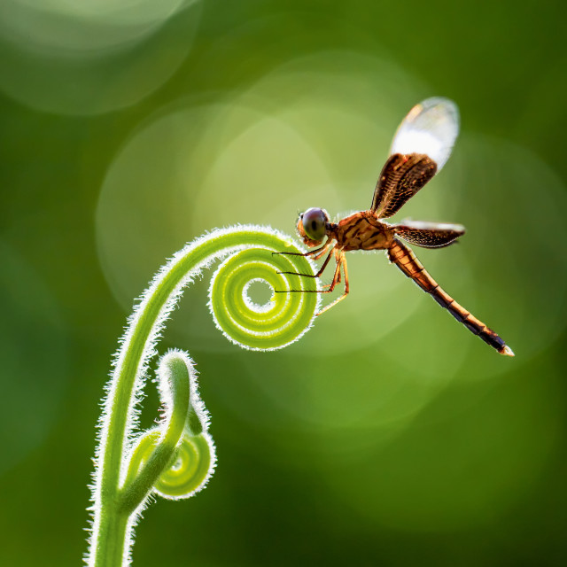 """""""A dragonfly in my garden"""" stock image"""