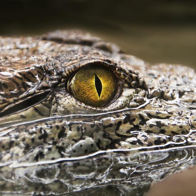"""""""Crocodile Eye"""" stock image"""