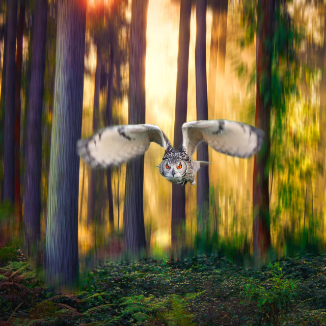 """""""Owl flying through a forest"""" stock image"""