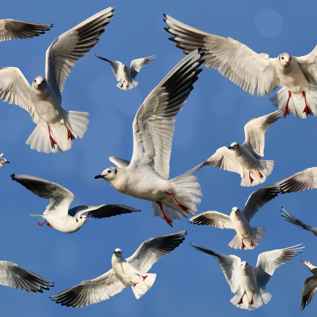 """""""Composition of Gulls"""" stock image"""