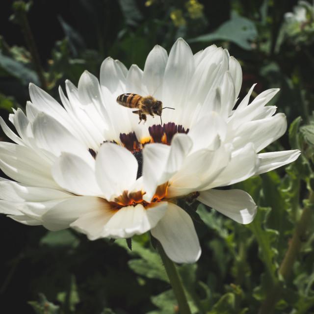 """Flower Coloured Like Butterfly III"" stock image"