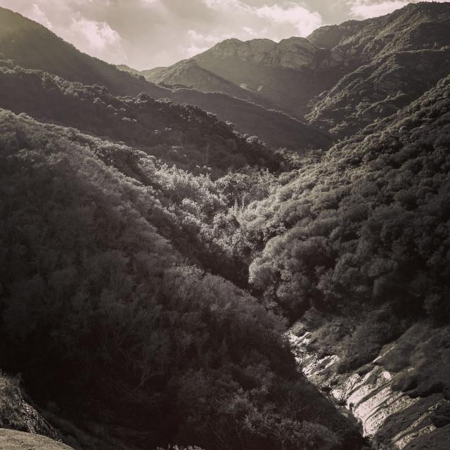 """""""""""Deep in the Canyon"""" topanga California"""" stock image"""