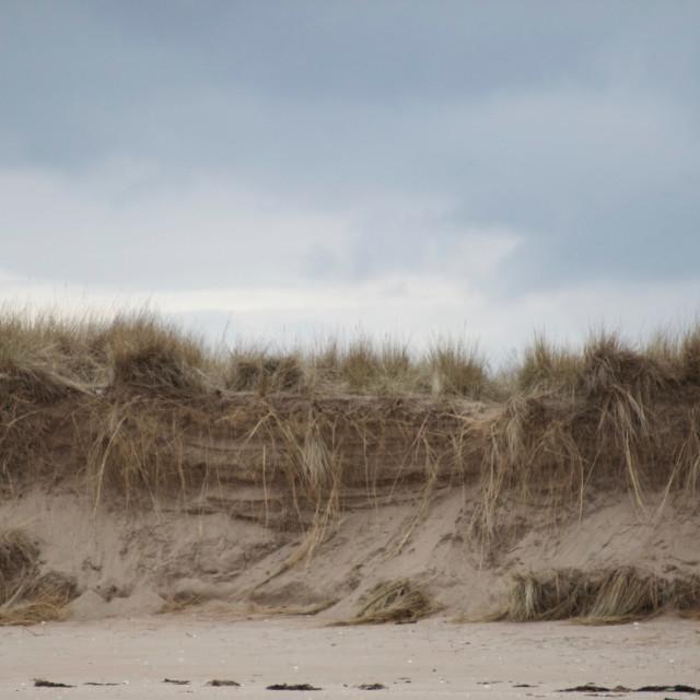 """Dunes at Tentsmuir"" stock image"