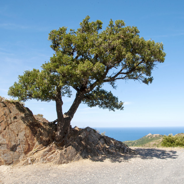 """""""Lone tree clinging to a rock"""" stock image"""