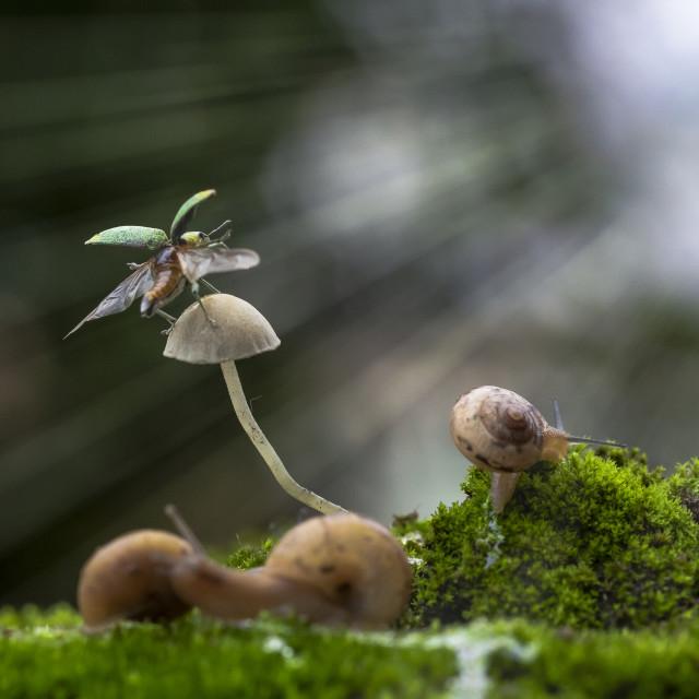 """Tiny world"" stock image"