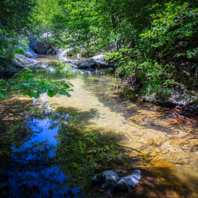 """""""Small transparent creek in a sunny day in the forest"""" stock image"""