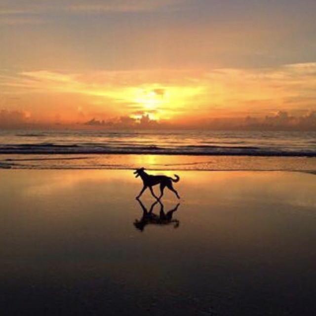 """Sun dog silhouette - Atlantic Beach Florida"" stock image"