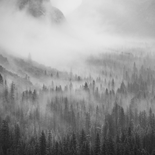 """Foggy Trees"" stock image"