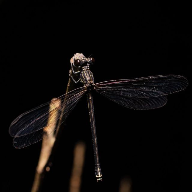 """Sleeping Dragonfly"" stock image"