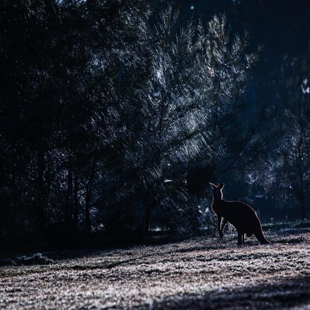 """Kangaroo Way 0285"" stock image"