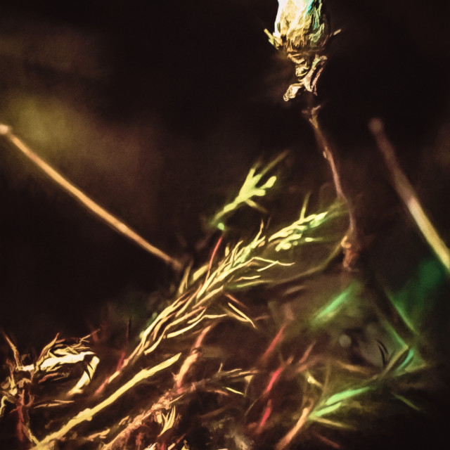 """Swamp Bud"" stock image"