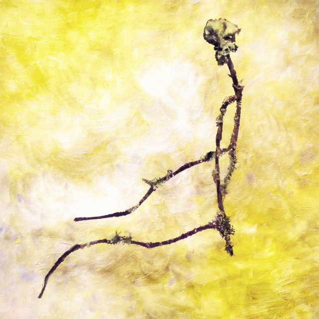 """""""Twig (Branch as Your Spine)"""" stock image"""