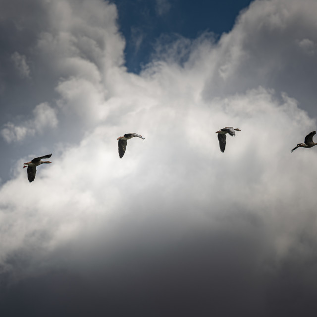 """Formation Fly Past"" stock image"