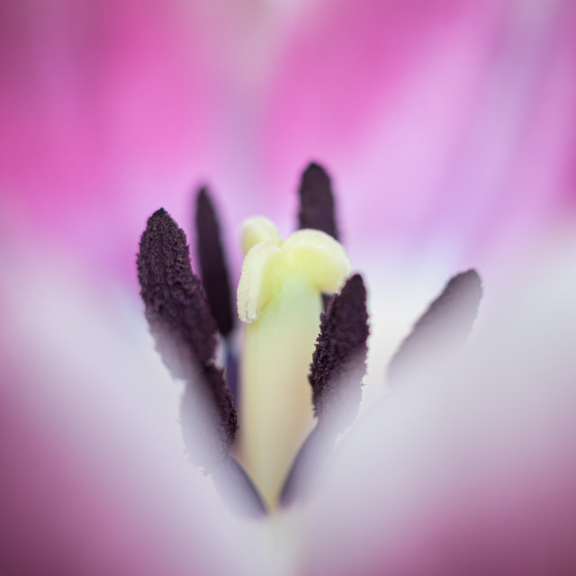 """Macro Flower"" stock image"