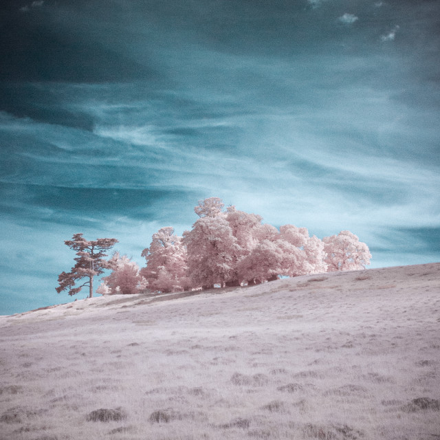"""Infrared Trees on a Hill"" stock image"
