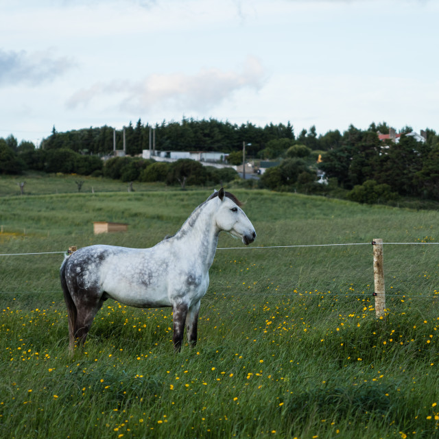 """""""Horse standing on a meadow"""" stock image"""