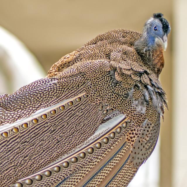 """""""A Beautiful Bird"""" stock image"""